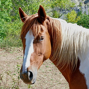 brown and white horse on grass fiedl