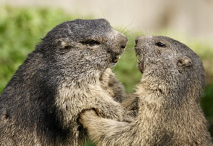 two gopher animals in selective focus photography