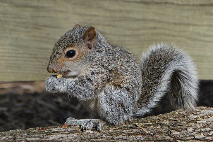 squirrel standing on tree branch