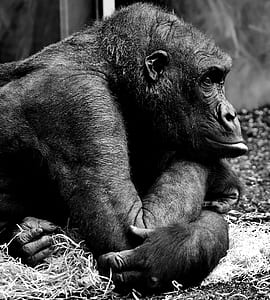 grey scale photography of monkey