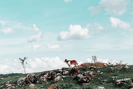 medium short-coated red and white dog on top of brown rocks