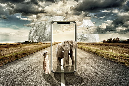 gray elephant standing beside woman holding umbrella smartphone advertisement photo