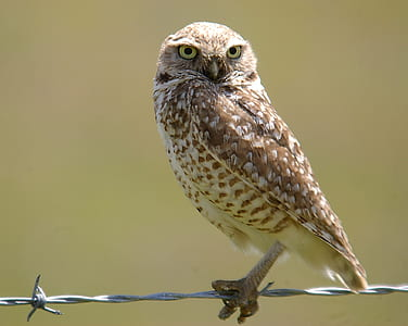 selective focus photography of brown owl on grey steel barbwire