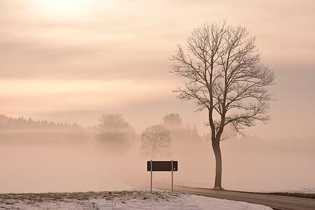 bare tree under white sky