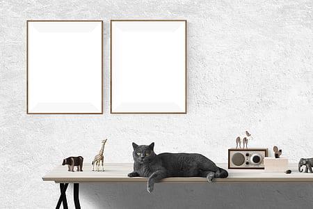 black cat on top white wooden rack
