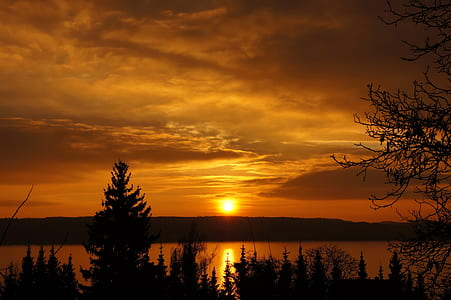 silhouette of pine trees beside a lake during sunset