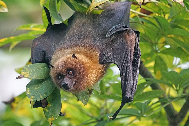 black bat on green leafed tree