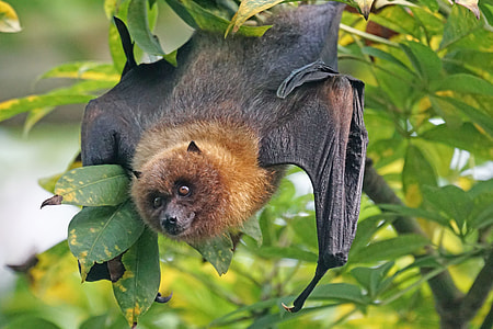black bat on green leafed tree