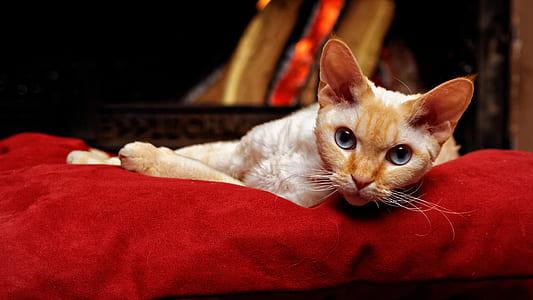 orange cat laying on red pet bed