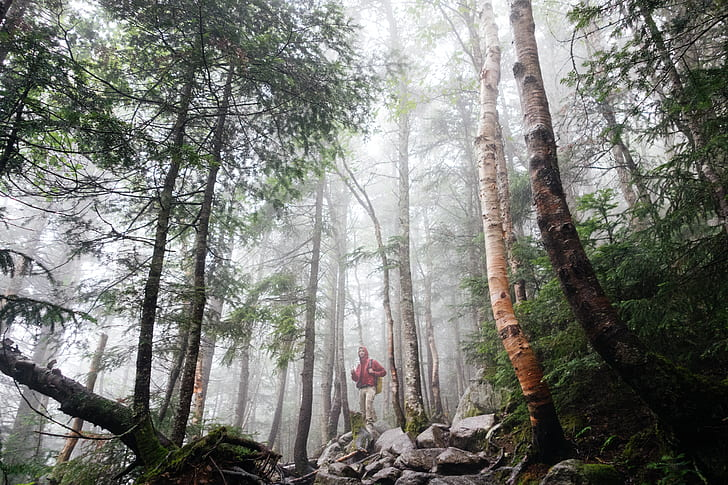 person in red hoodie and white pants standing in the middle of forest