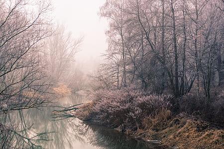 river beside bare trees