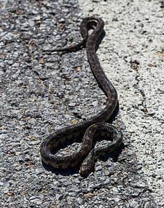 black and brown snake