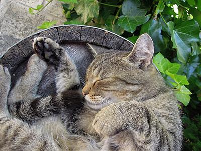 sleeping gray cat on gray surface