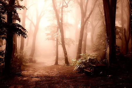 dirt path under shade of trees dury foggy time
