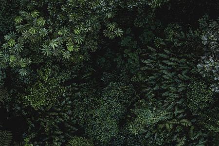 green leave plants