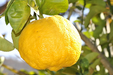 selective focus photo of lemon fruit