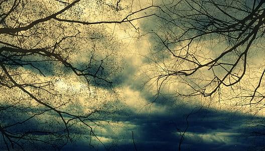 photo of black bare tree during daytime