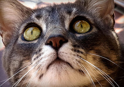 close-up photography of black and brown fur cat