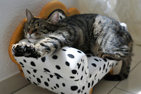 brown Tabby cat sleeping on white and black polka-dot sofa chair