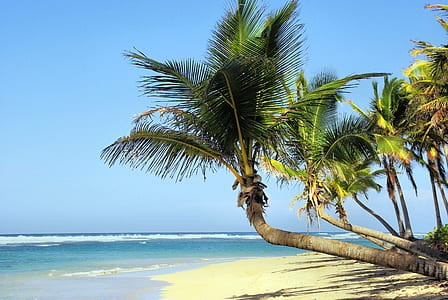 green palm tree on beach near body of water