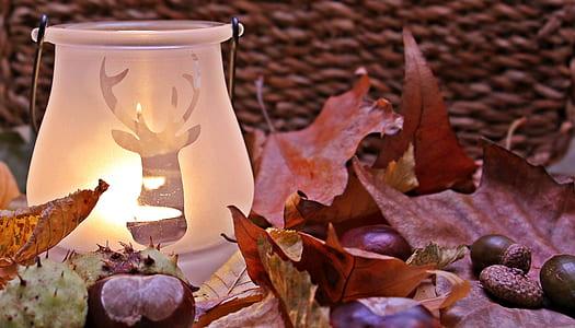 white lamp near brown maple leafs