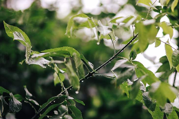Wet spring garden