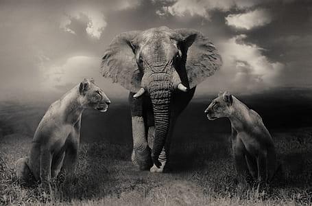 grayscale photo of elephant between tigresses