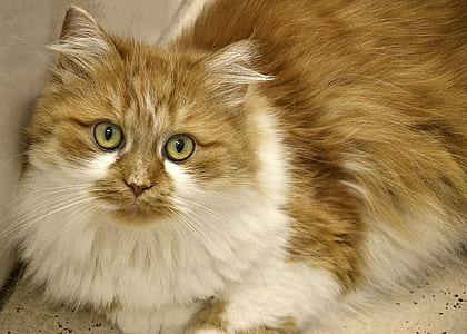 orange and white cat prone on white surface