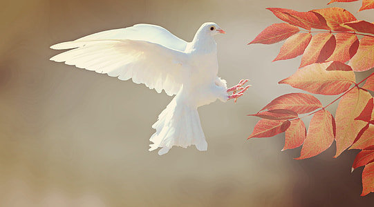 white dove landing on orange tree leaves