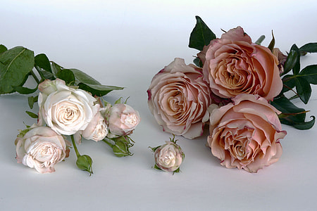 two white and pink petaled flowers