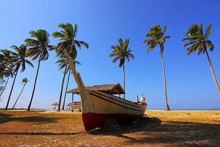 Palm Trees Blue Sky Boat