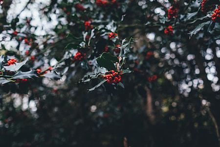 mistletoe selective focus photography at daytime