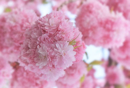 selective focus photo of pink flowers lot