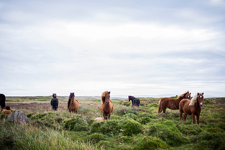 herd of horses on grass under stratus clouds