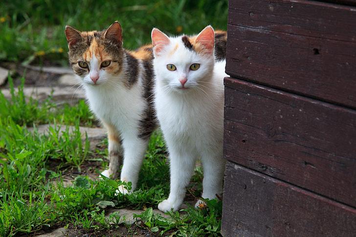 Royalty Free Photo Two Orange And White Tabby Cats Pickpik