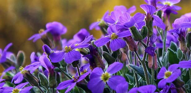 purple 4-petaled flowers closeup photo
