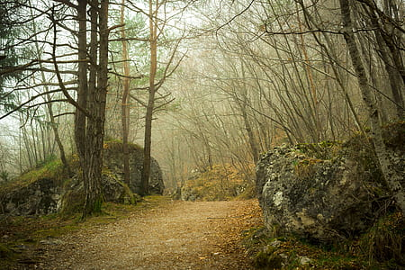 pathway between withered trees during foggy weather at daytime