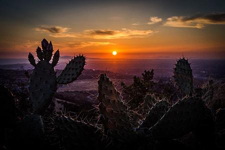 silhouette of cactus near seashore at sunset