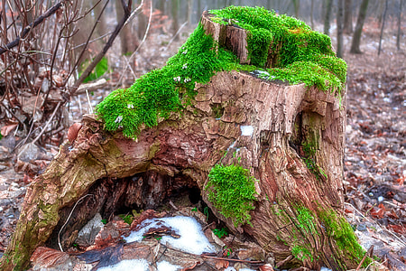 green covered brown tree trunk