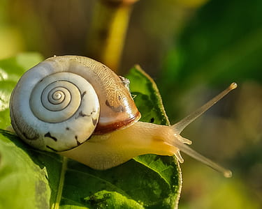 macro photography of snail on leaf