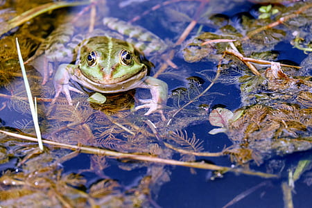 closed-up photography of green frog