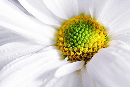Macro shot of a white flower