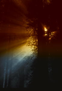 Ray of Sunlight Flowing in Trees