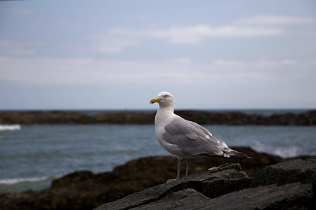 white and grey bird on black rock
