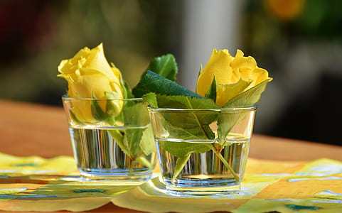 two yellow roses on cup with water