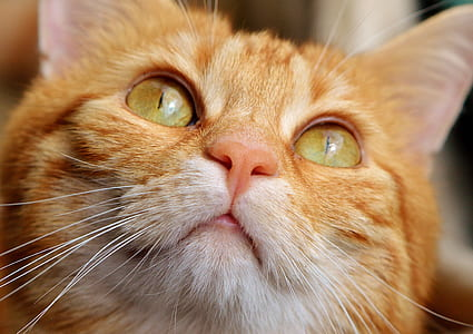 close up shot of orange tabby cat