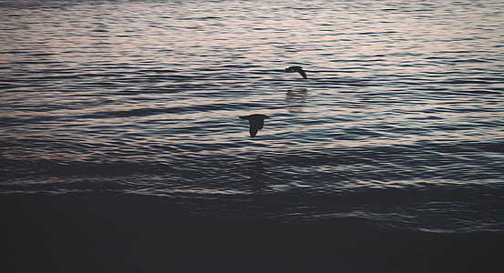 photography of two birds hovering over body of water