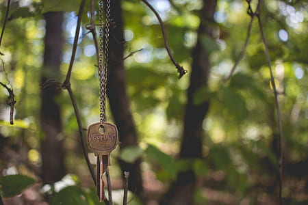 gray key hanging on twig