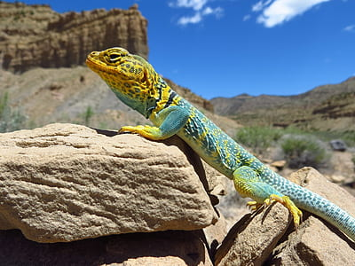 teal and brown lizard on stone under blue and white sunny sky during daytime