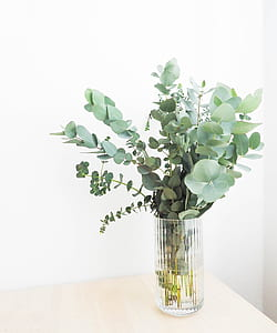 green plant in cut glass vase